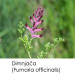 Dimnjača (Fumaria officinalis)